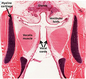 Human Structure Virtual Microscopy